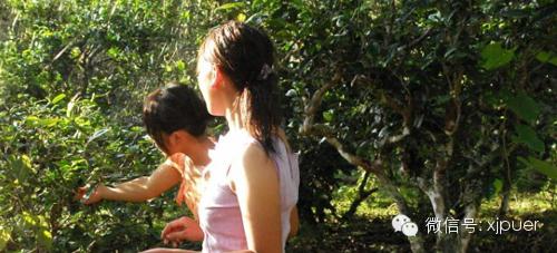 普洱茶产业链的延伸
